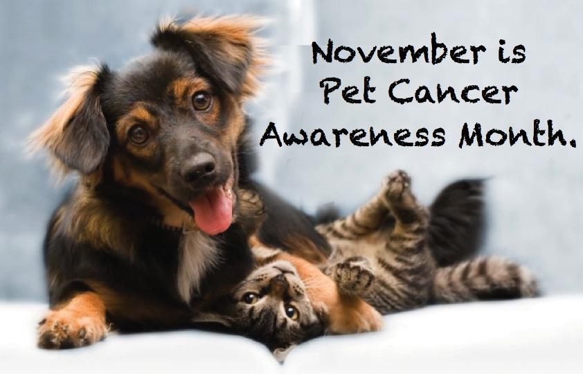 PetCancerAwareness
