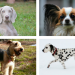 Thumbnail for The Origins of 10 Nicknames of Dog Breeds